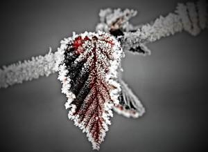 leaf-787261_640